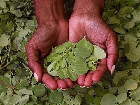 obat herbal asam lambung naik ke tenggorokan