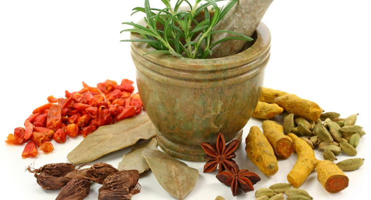 tanaman herbal maag